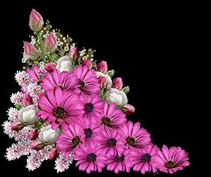 kukkalaite