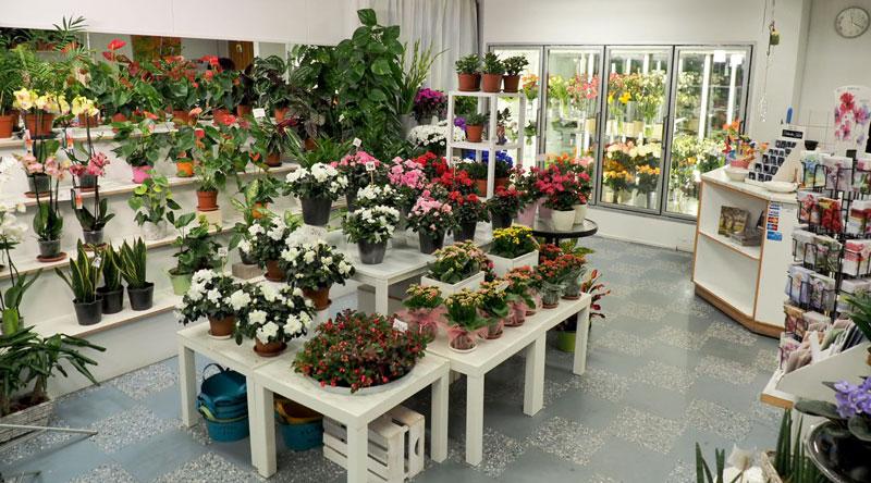 Yleiskuva kukkakaupan sisältä