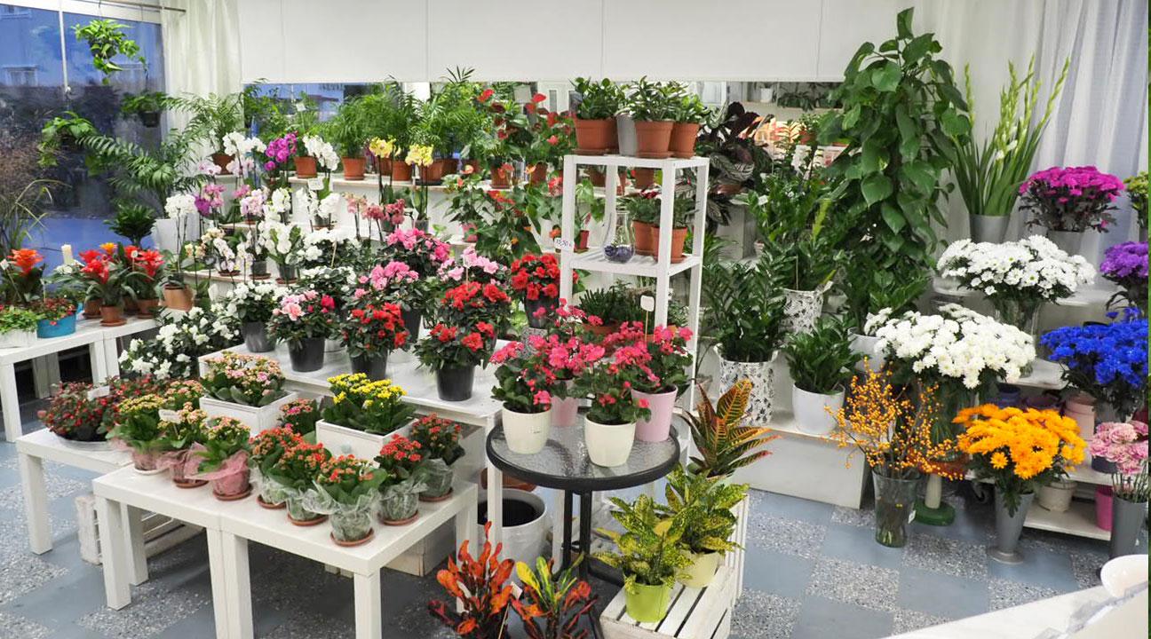 Laaja kuva kukkakaupasta